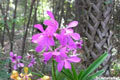 Free Orchid Photo